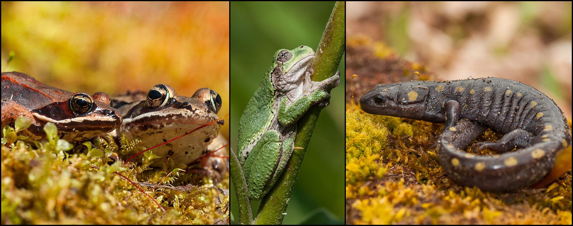 amphibian_1900x750