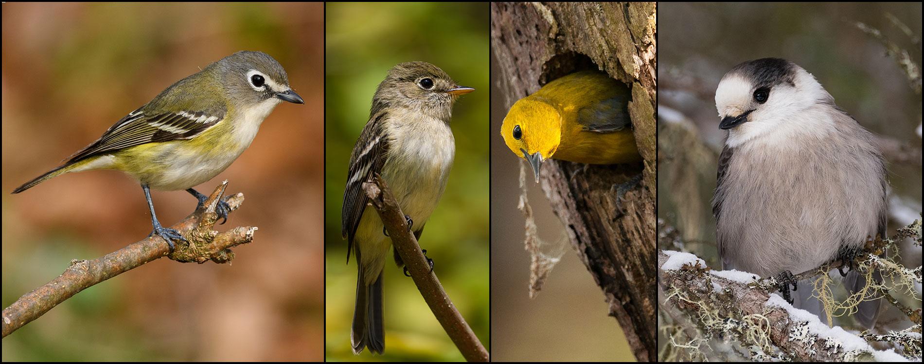 birds4_1900x750
