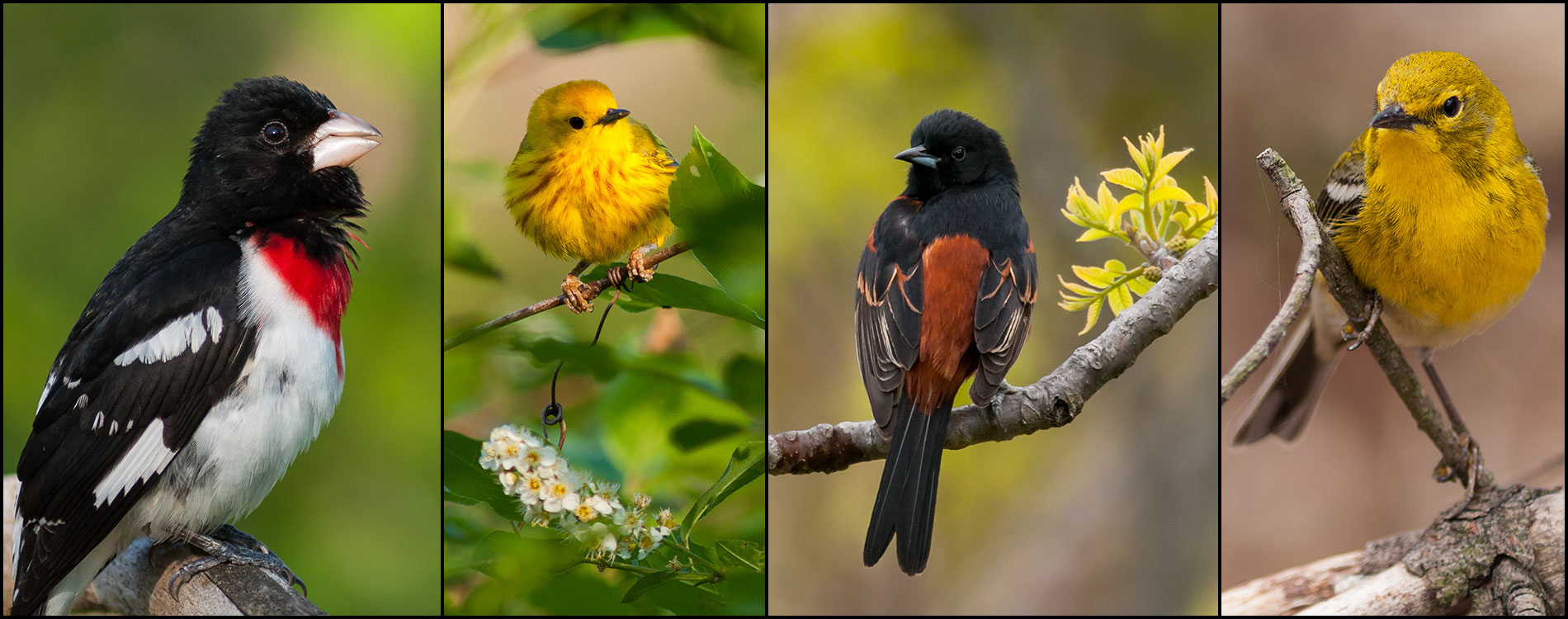 birds5_1900x750