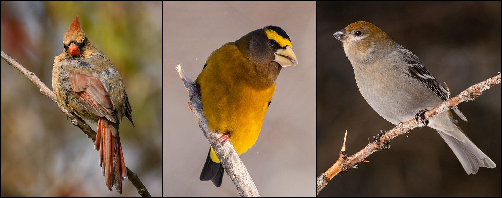 birds_1900x750