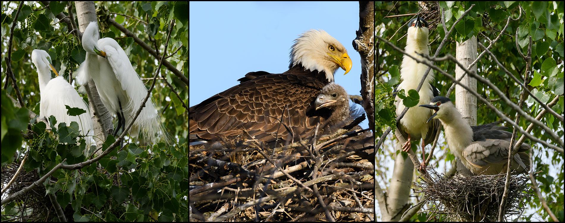 nesting_1900x750