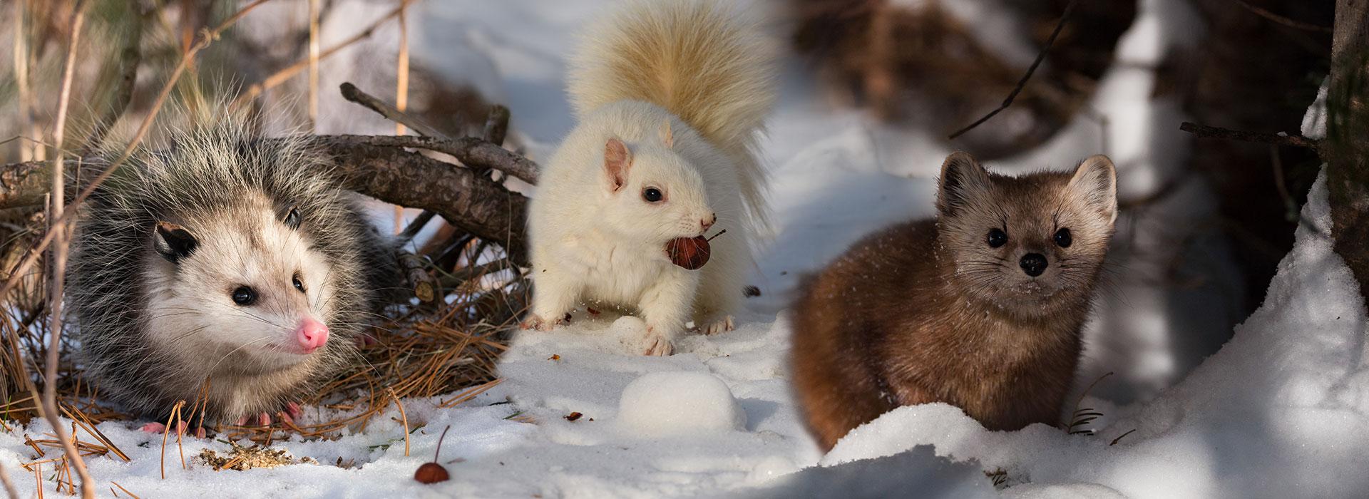 Mammals Photo Gallery